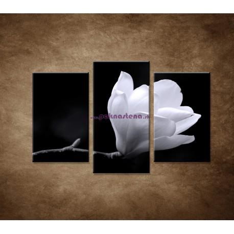 Obrazy na stenu - Kvet magnólie - 3dielny 75x50cm