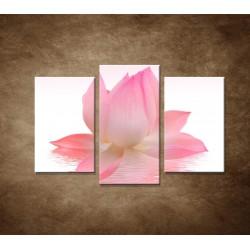 Lotosový kvet - 3dielny 75x50cm