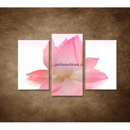 Obrazy na stenu - Lotosový kvet - 3dielny 75x50cm