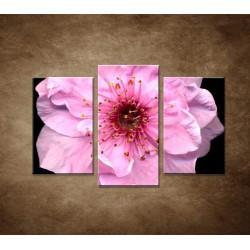 Kvet čerešne - 3dielny 75x50cm