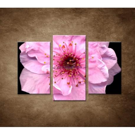 Obrazy na stenu - Kvet čerešne - 3dielny 75x50cm