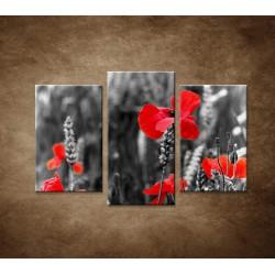 Červené vlčie maky - 3dielny 75x50cm