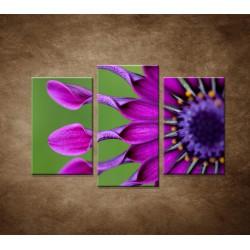 Tropický kvet - 3dielny 75x50cm