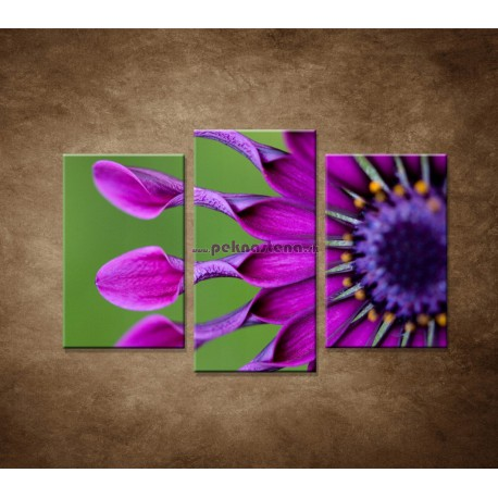 Obrazy na stenu - Tropický kvet - 3dielny 75x50cm