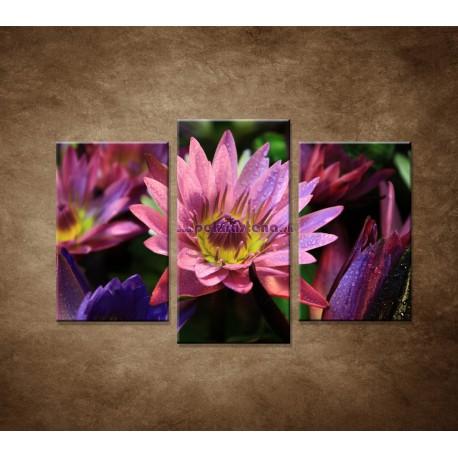 Obrazy na stenu - Lotosové kvety - 3dielny 75x50cm