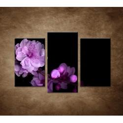 Čerešňový kvet - 3dielny 75x50cm