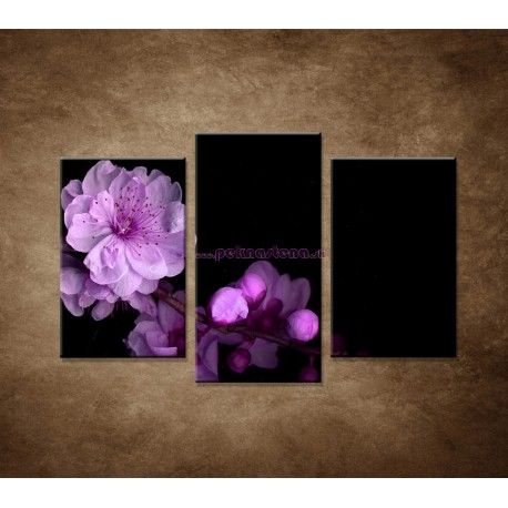Obrazy na stenu - Čerešňový kvet - 3dielny 75x50cm