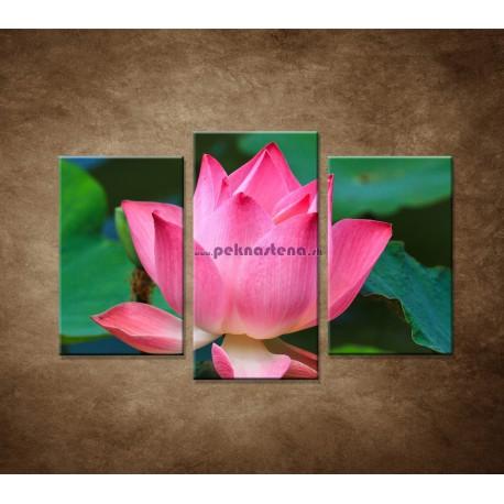 Obrazy na stenu - Lekno 2 - 3dielny 75x50cm