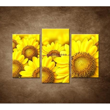 Obrazy na stenu - Lúka slnečníc - 3dielny 75x50cm