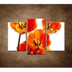Oranžové tulipány - zátišie - 3dielny 75x50cm
