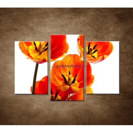 Obrazy na stenu - Oranžové tulipány - 3dielny 75x50cm