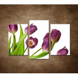 Fialové tulipány - 3dielny 75x50cm