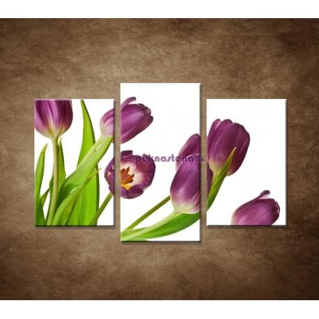 Obrazy na stenu - Fialové tulipány - 3dielny 75x50cm