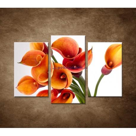 Obrazy na stenu - Oranžové kaly - 3dielny 75x50cm