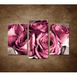 Kytica ruží - 3dielny 75x50cm