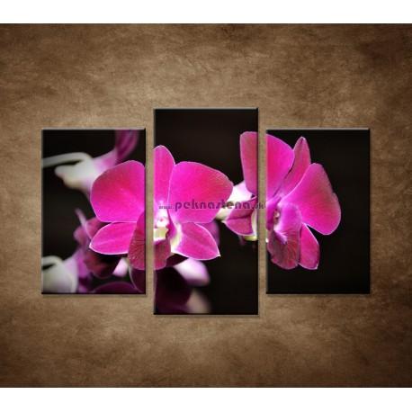 Obrazy na stenu - Ružová orchidea na čiernom pozadí - 3dielny 75x50cm