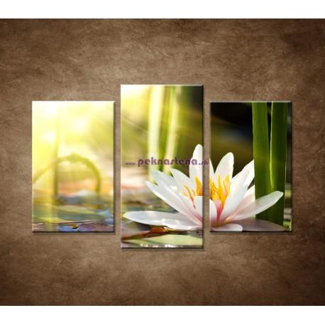 Obrazy na stenu - Lekno - 3dielny 75x50cm