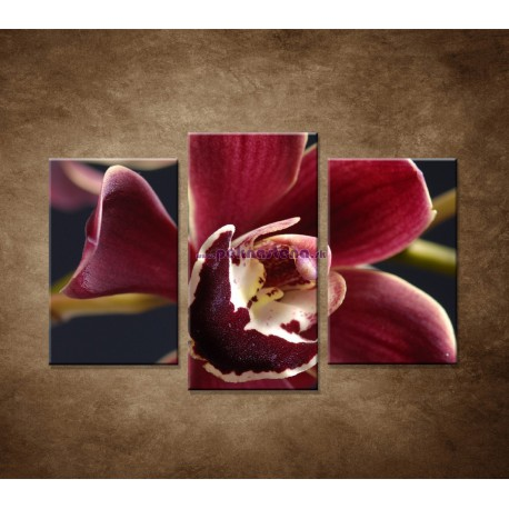 Obrazy na stenu - Bordová orchidea - 3dielny 75x50cm
