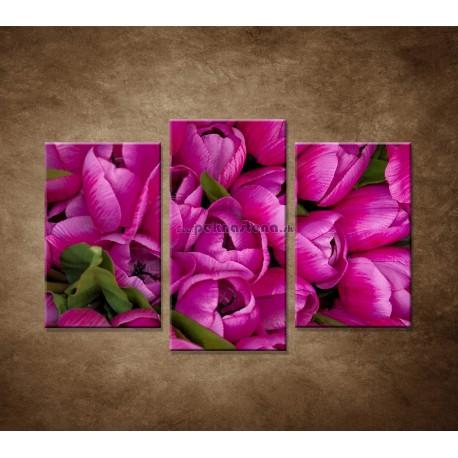 Obrazy na stenu - Krásne tulipány - 3dielny 75x50cm