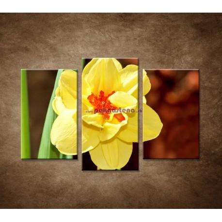 Obrazy na stenu - Narcis - detail - 3dielny 75x50cm