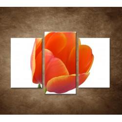 Tulipán - detail - 3dielny 75x50cm