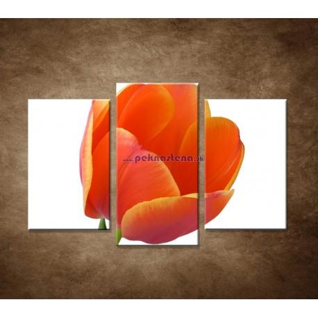 Obrazy na stenu - Tulipán - detail - 3dielny 75x50cm