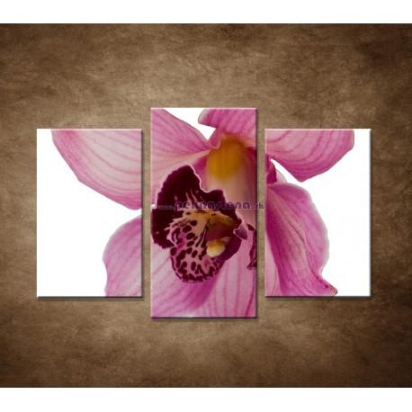 Obrazy na stenu - Orchidea - detail - 3dielny 75x50cm
