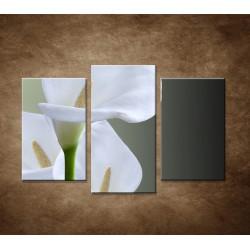 Tri biele kaly - 3dielny 75x50cm