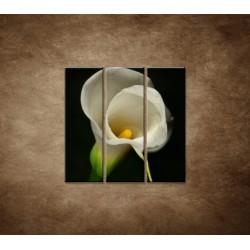 Obrazy na stenu - Kala - 3dielny 90x90cm