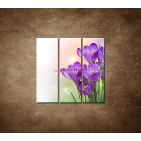 Obrazy na stenu - Krokusy - 3dielny 90x90cm