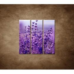 Obrazy na stenu - Levanduľa - 3dielny 90x90cm