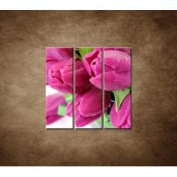 Obrazy na stenu - Tulipány - 3dielny 90x90cm