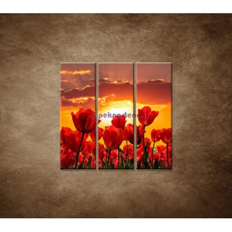 Obrazy na stenu - Západ slnka nad tulipánmi - 3dielny 90x90cm