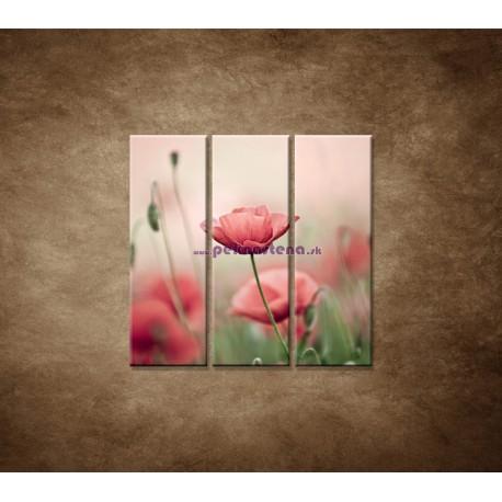 Obrazy na stenu - Vlčie maky - 3dielny 90x90cm
