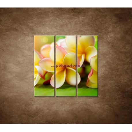 Obrazy na stenu - Žltá orchidea - 3dielny 90x90cm
