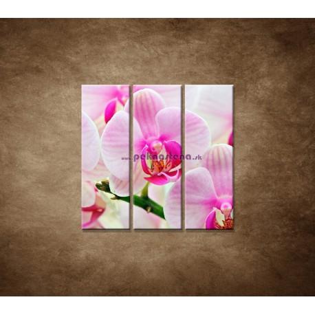 Obrazy na stenu - Ružová orchidea - 3dielny 90x90cm