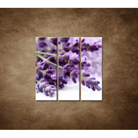 Obrazy na stenu - Kvet levandule - 3dielny 90x90cm