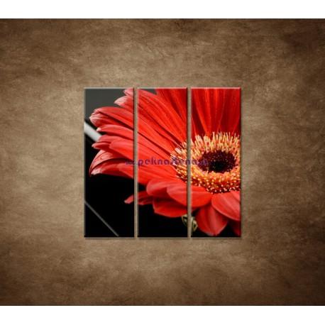 Obrazy na stenu - Gerbera - 3dielny 90x90cm