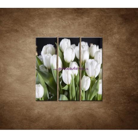 Obrazy na stenu - Biele tulipány - 3dielny 90x90cm