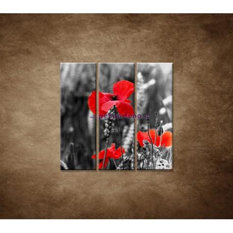 Obrazy na stenu - Červené vlčie maky - 3dielny 90x90cm