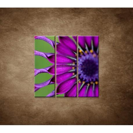 Obrazy na stenu - Tropický kvet - 3dielny 90x90cm