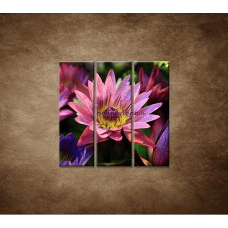 Obrazy na stenu - Lotosové kvety - 3dielny 90x90cm
