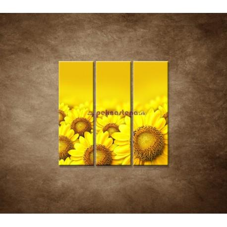 Obrazy na stenu - Lúka slnečníc - 3dielny 90x90cm