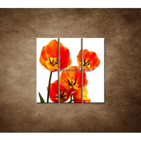 Obrazy na stenu - Oranžové tulipány - 3dielny 90x90cm