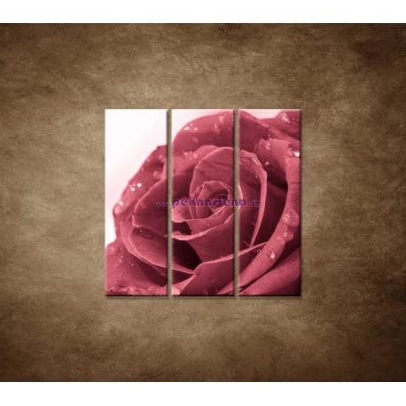 Obrazy na stenu - Ruža s rosou - 3dielny 90x90cm