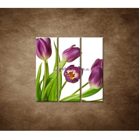 Obrazy na stenu - Fialové tulipány - 3dielny 90x90cm
