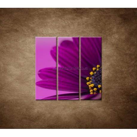 Obrazy na stenu - Fialová gerbera - 3dielny 90x90cm