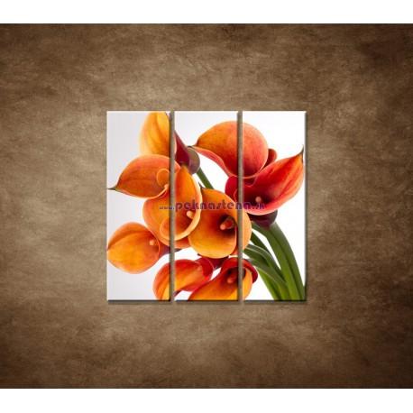 Obrazy na stenu - Oranžové kaly - 3dielny 90x90cm