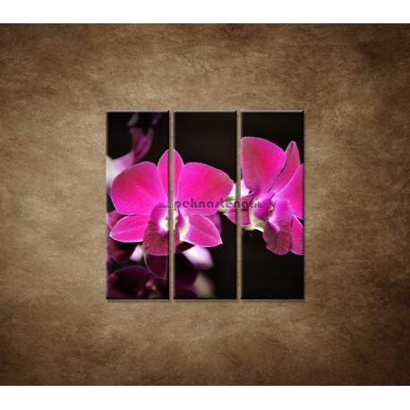Obrazy na stenu - Ružová orchidea na čiernom pozadí - 3dielny 90x90cm