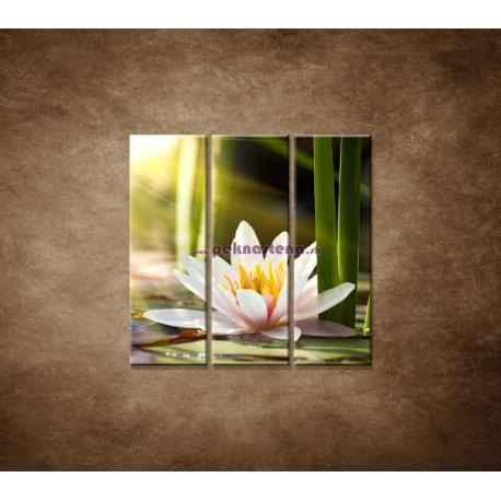 Obrazy na stenu - Lekno - 3dielny 90x90cm